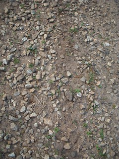 Swamp Rabbit Trail rough surface | by RandomConnections