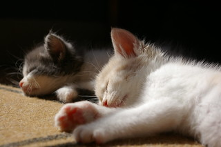 Afternoon nap | by Christie D. Mallon
