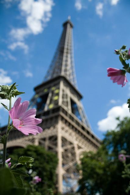 Paris is a flower