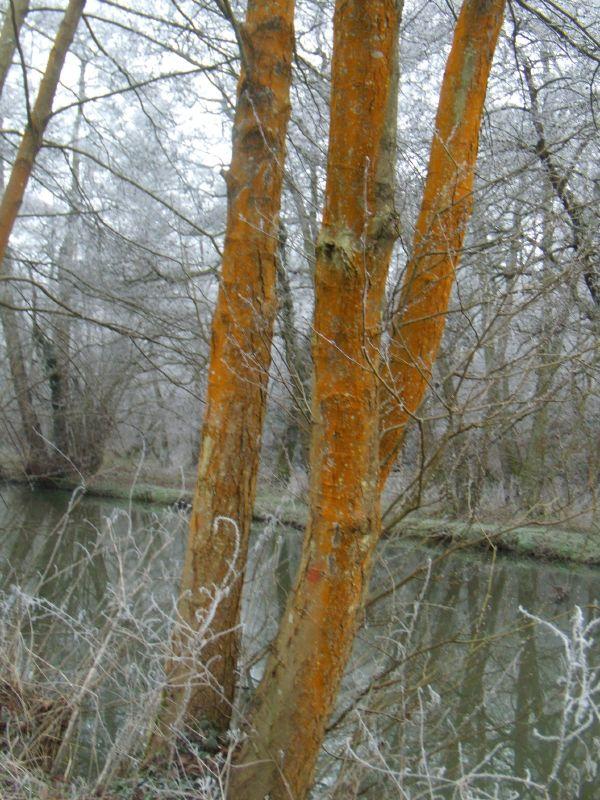 Weyside trees Wanborough to Godalming