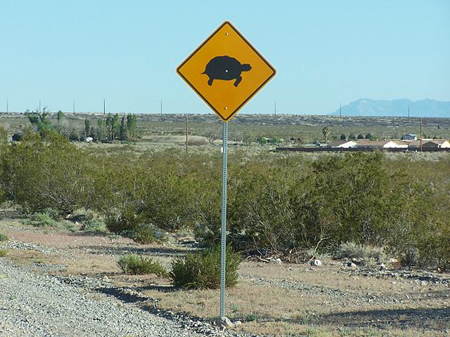 Turtle crossing.jpg