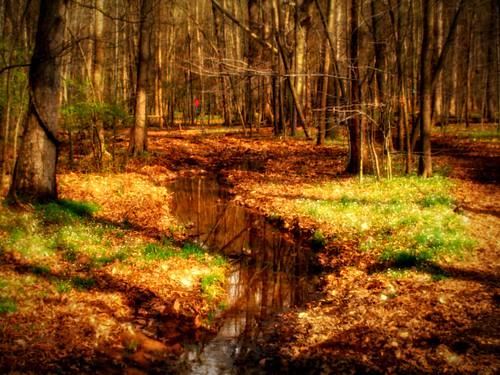 trees sunlight creek forest landscape virginia woods path va centreville bullrunpark chrysti hik enature