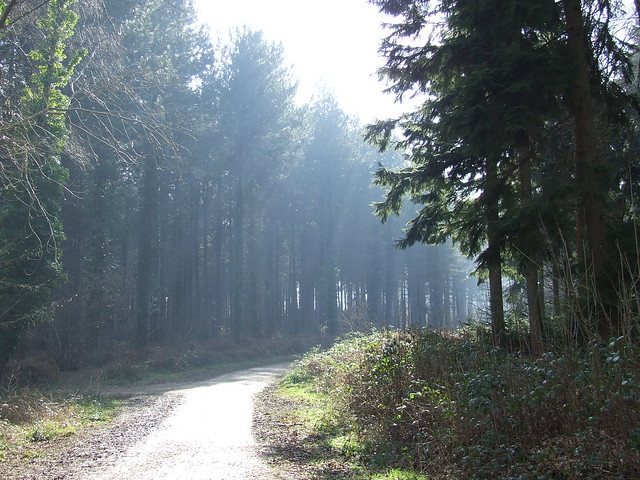 Forest of Bere