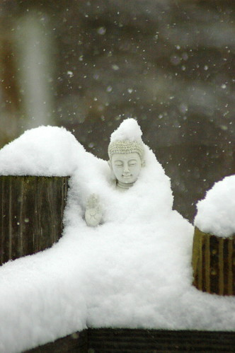 cold buddha | by dadofliz