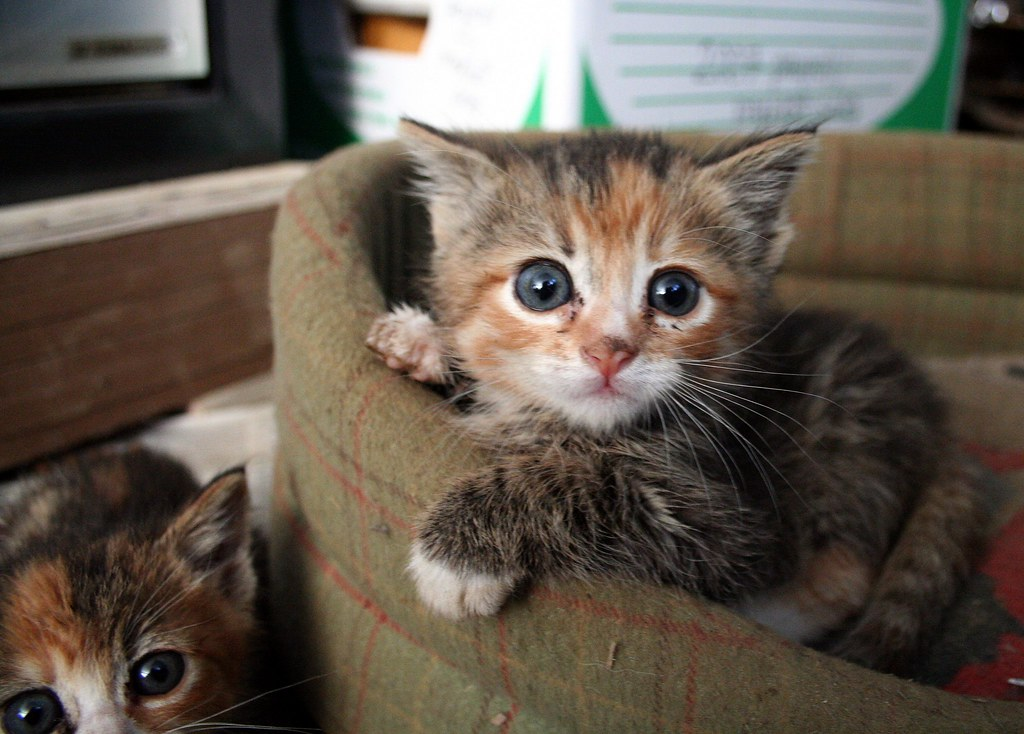 the kittens | they were hiding out in the eatwell farm offic… | Flickr