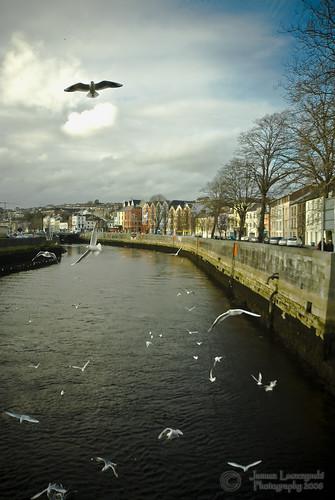 bridge ireland seagulls geotagged seagull cork emeraldisle janusz leszczynski 4821 geo:lat=51901124 geo:lon=8476167