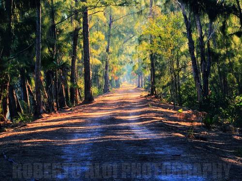 florida westpalmbeach hdr s700 wetland s5700 apoxeepark