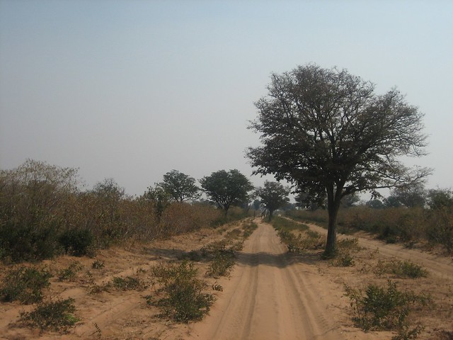 Savana sulla strada per Savuti