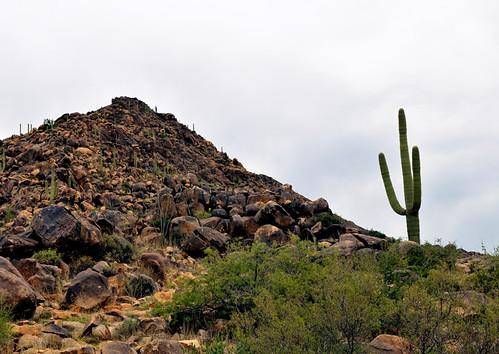 arizona cactus usa southwest rock america landscape outdoors nikon scenery hill az western ghosttown 1755mmf28g nikkor barren octave oldwest d300 olewest