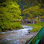雨に濡れた萌黄色( もえぎいろ) 四万温泉 2011/05/11