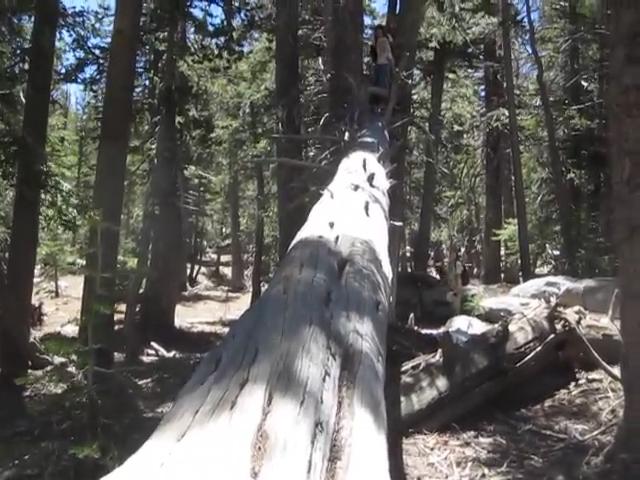 371_Tamarack-Valley-Tree-Walking