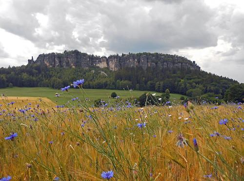 sommer landschaft elbsandsteingebirge pfaffenstein sandsteiner