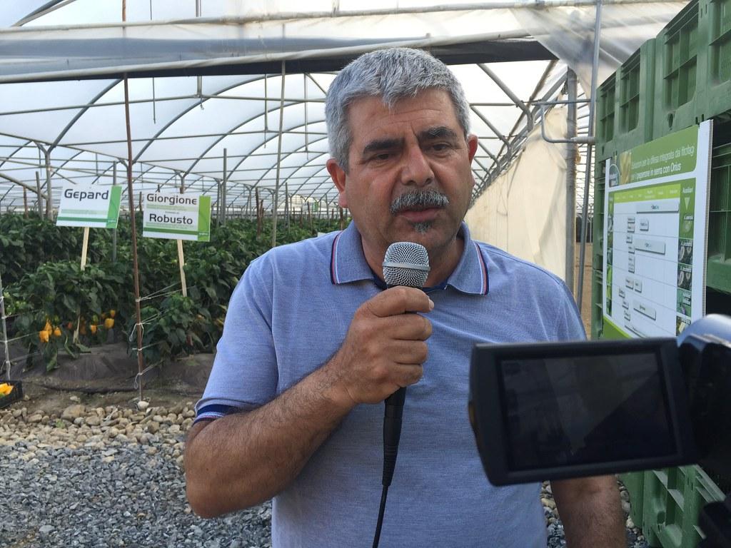 Orticoltura e Valore - prove in campo Peperone 2015 - 2104