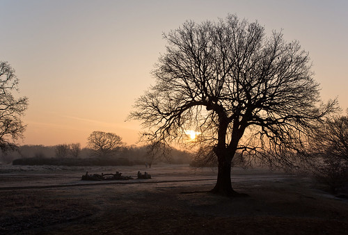 london epping eppingforest hollowpond ice frost sunrise