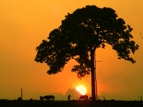 Castanheira - Sunrise   by Ana_Cotta