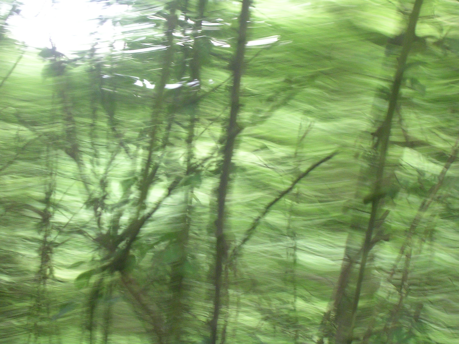 Trees Ashurst to Hartfield