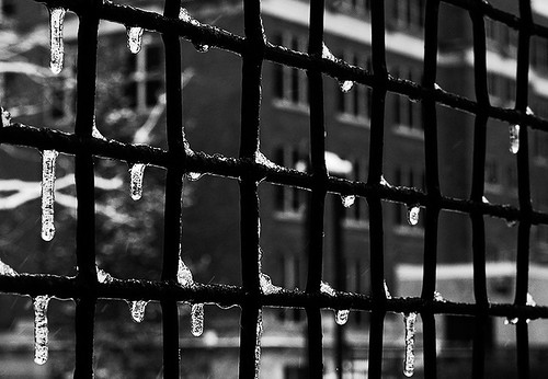 Caged in Winter