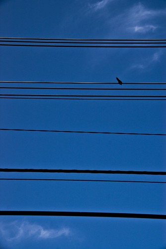 Bird on a String   by J e n s
