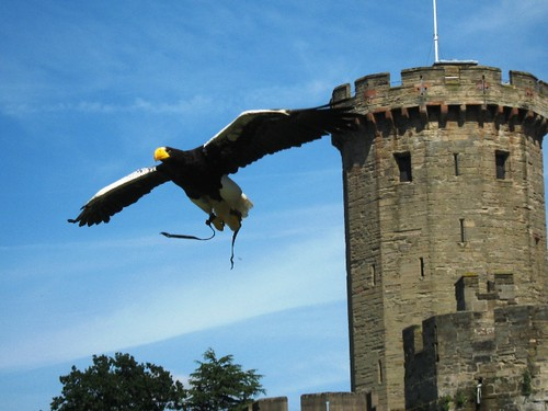 Steller's Sea Eagle | by gilfling