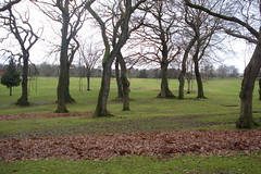 Lorraine Trees