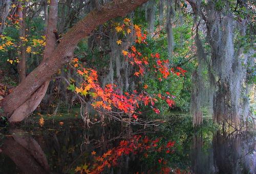 morning autumn trees usa water canon reflections landscape kayak fallcolor southcarolina goosecreek soe tamron1750 40d abigfave canon40d photosexplore