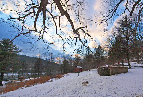 dog chien dogs cane perro hund hunde foxterrier perra wirefoxterrier