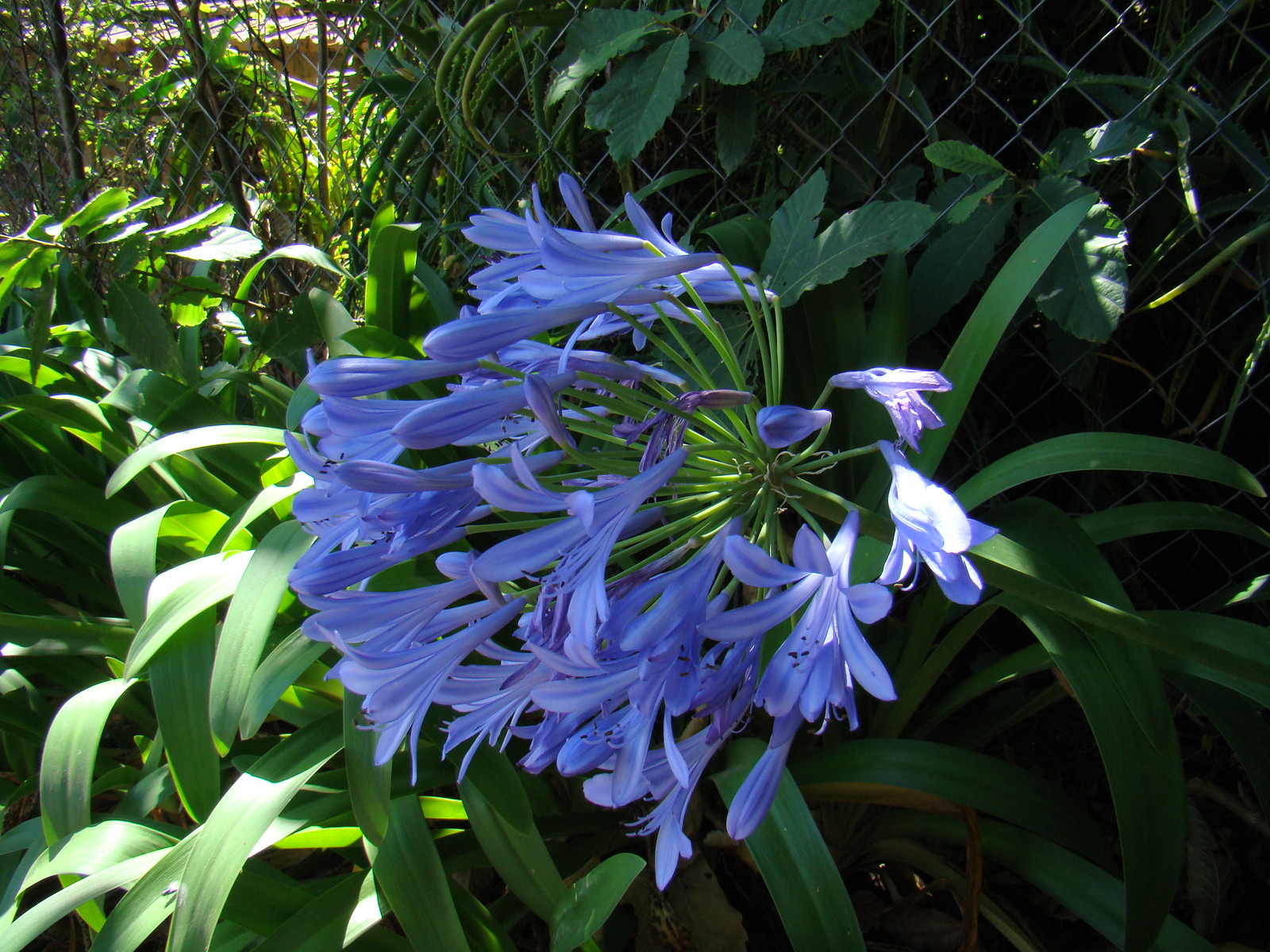 flores Cueva Corcho Las Madres Gran Canaria 03