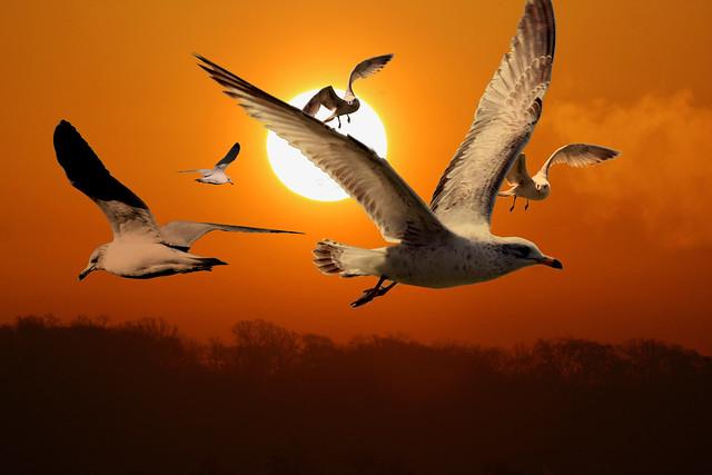 Sun & Seagulls 1