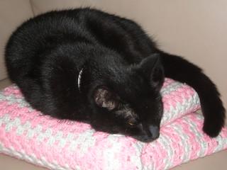 Dim Sim's Lazy Sunday Afternoon Snooze
