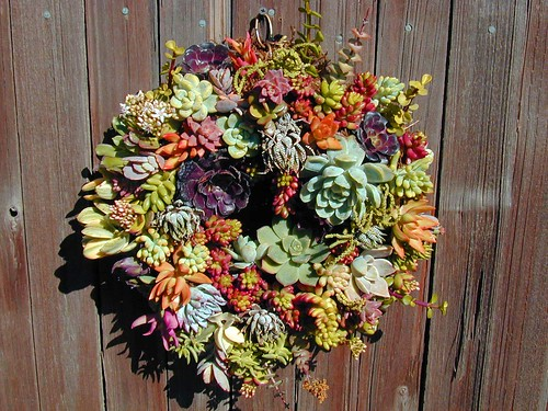 succulent wreath, I'm in love | by KellyPrizelPhoto