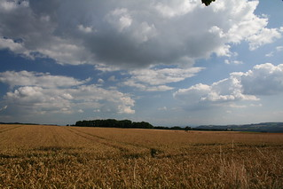 Biken (24.07.08) - Cornfield with Clouds | by Philipp_Roth