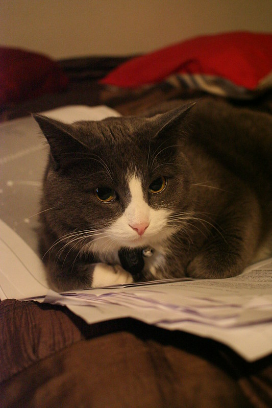Proofreading Kitteh