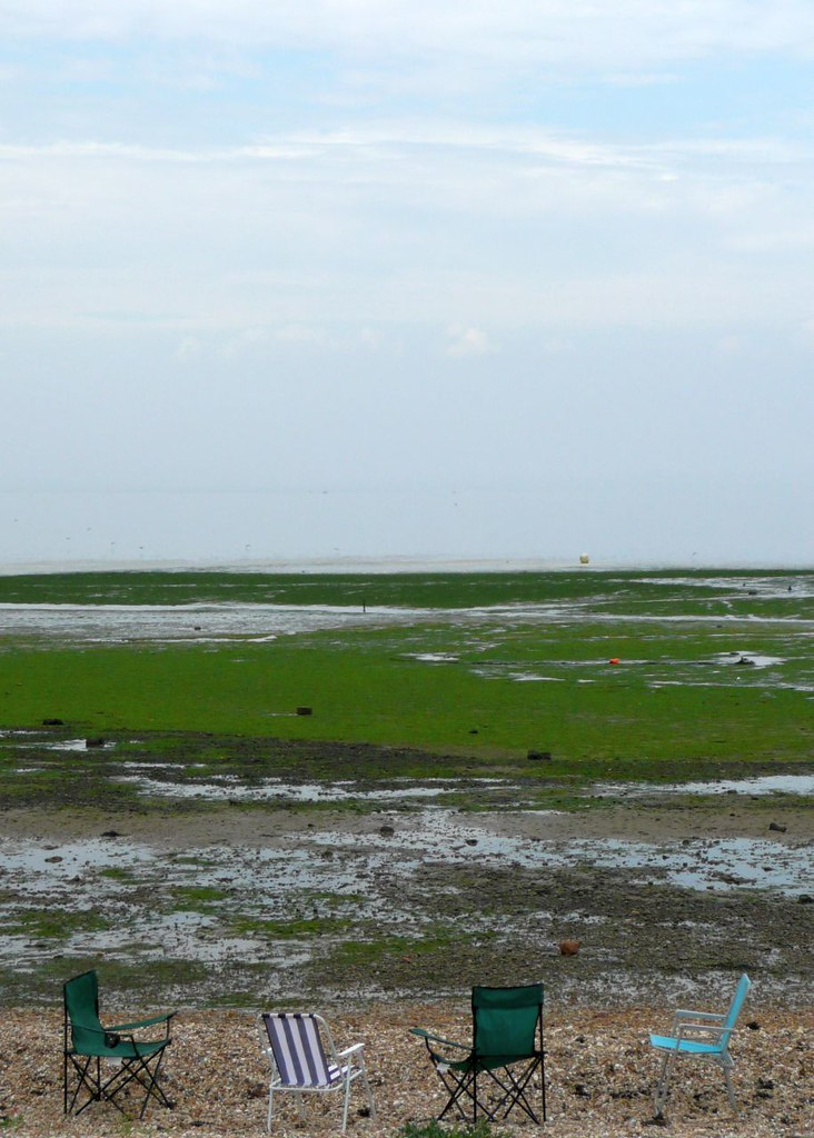 Book 3, Walk 12, Faversham to Whitstable Come to Whitstable & watch the algae grow. 26 July '08.
