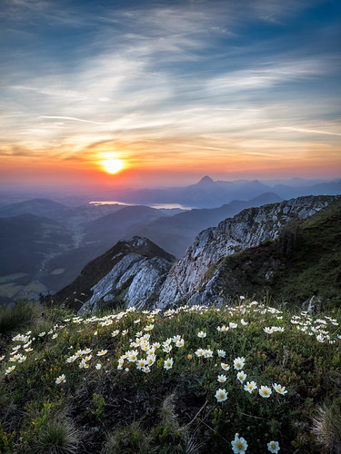 flowers mountain sunrise salzkammergut brunnkogel
