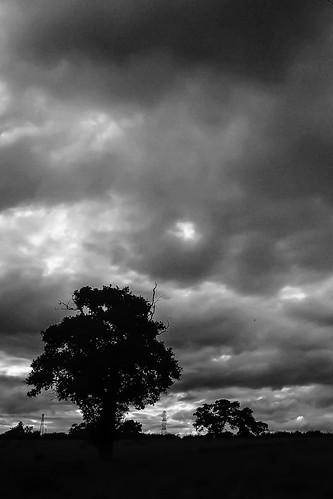 tree dark mono moody cheshire crewe leighton 230715 olympuspenmini