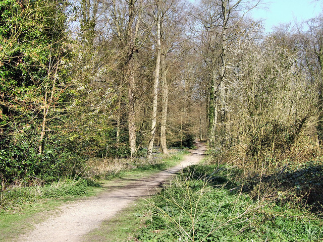Forest of Bere, Meon Valley, Hampshire