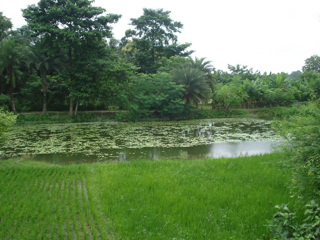 Village of Bengal | Green  green   village of bengal | Atanu