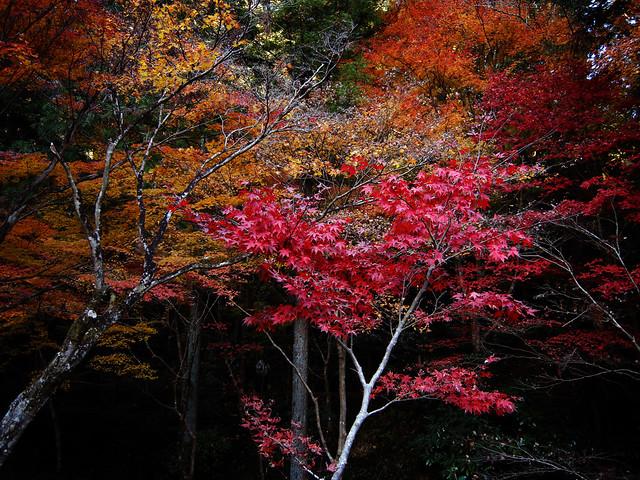 Autumn tint 10