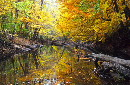 reflection tree film nature water mi river leaf fallcolor autofocus nikonf4 nikkor50mmf14 nikoncoolscan5000ed fujivelvia100film warenwoodsstatepark