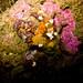 Flickr photo 'Find the Crab' by: Ken-ichi.