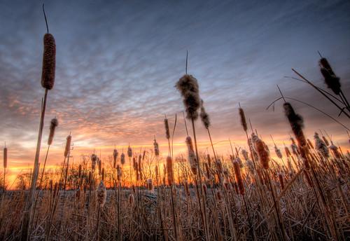 park sunrise canon spectacular rebel dawn day cloudy glasgow predawn hdr cattail xsi delawareonline februaryworldwidehdr2009contest regionwide