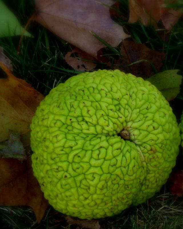 Weird Green Fruits 3