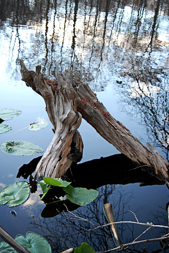 "nikon centralflorida digitalcameraclub silverriver nikond80 natureandnothingelse ""flickraward"" sharpsferry"