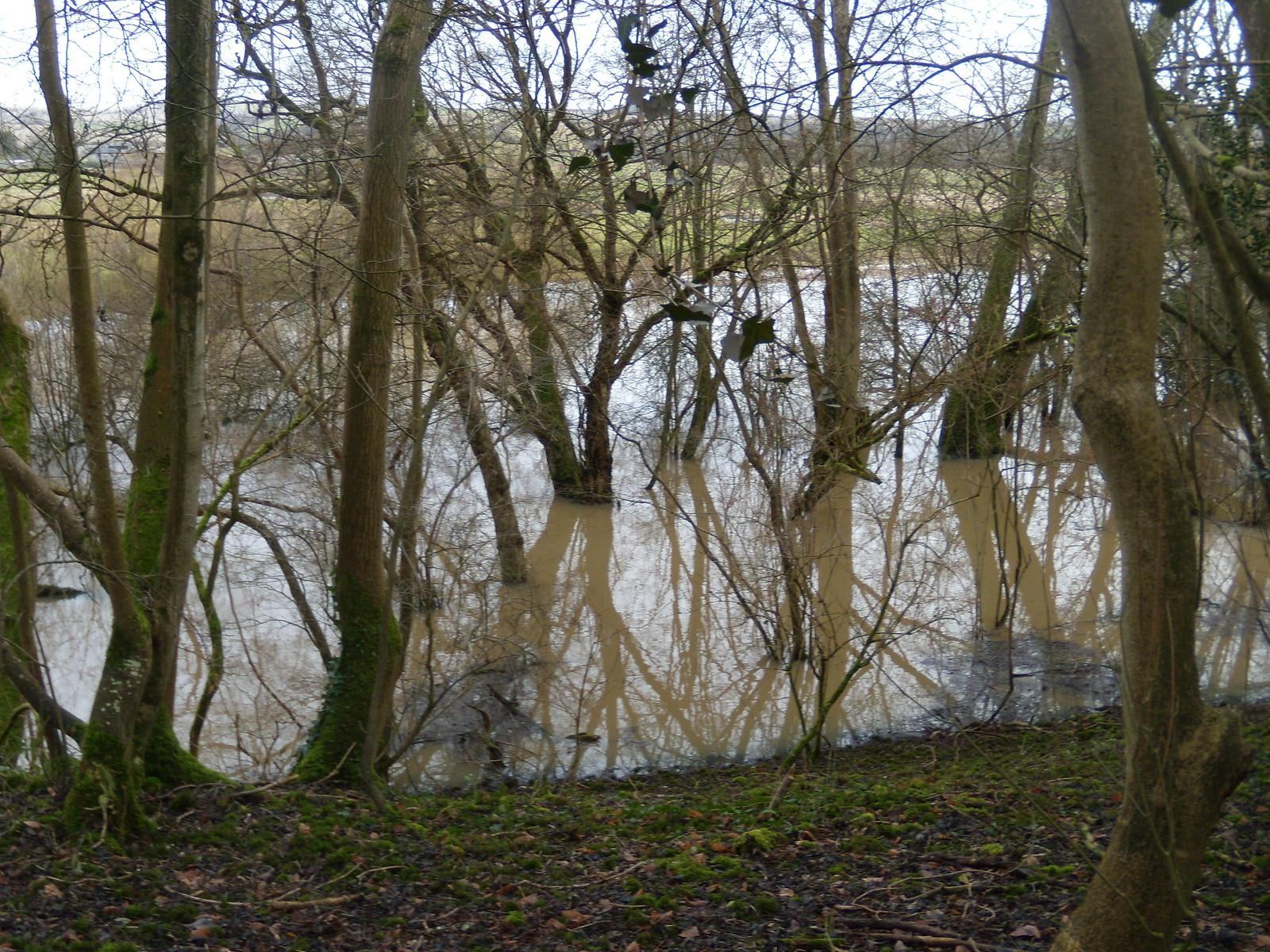 Flooded trees Arundel Circular
