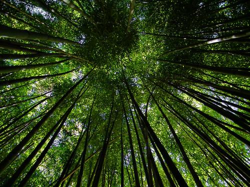 trees chattanooga nature tn pov tennessee bamboo marylee visualart blueribbonwinner anawesomeshot maryleemartin cmwd cmwdgreen goldstaraward kodakz1015is maryleeusa maryleepope