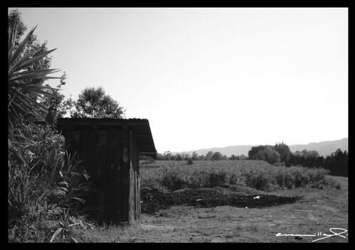 Campo gris