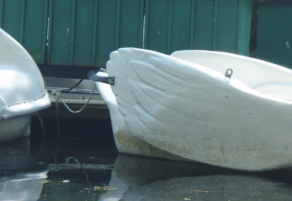 detail of the back end of the swan