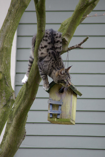 Unsafe Birdhouse