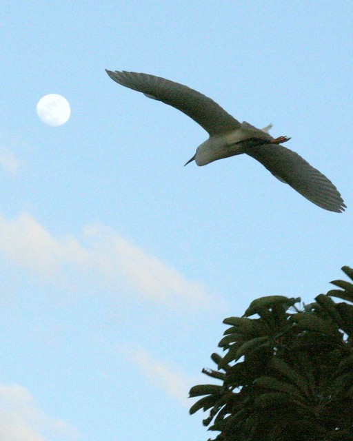 to the moon, egret...