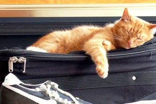 Cat on suitcase | by ftzdomino